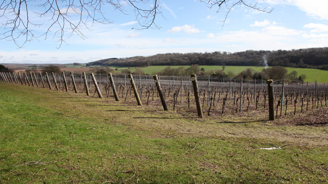 The Hambledon Vineyard is on the same seam of chalk as Champagne, France