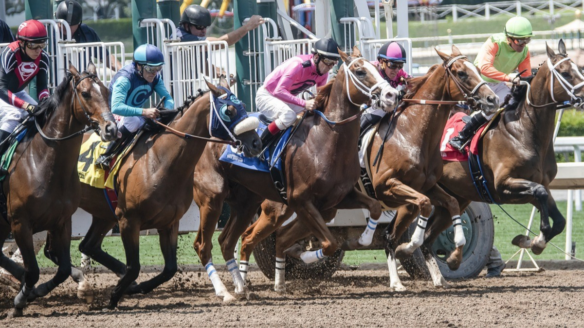 Horses in a horserace